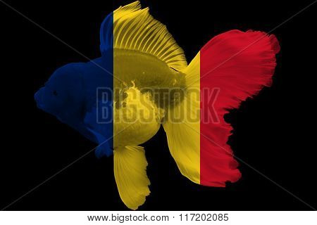 Flag Of Romania On Goldfish