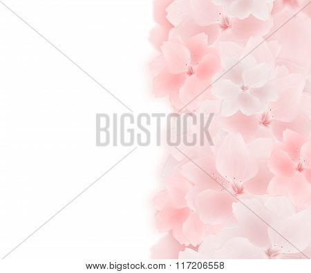 Hand drawn sakura flowers background.