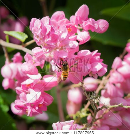 Back view of honey bee pollinating flowers