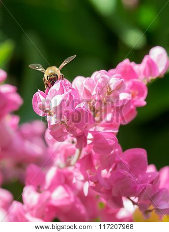Frontal view of honey bee pollinating flowers