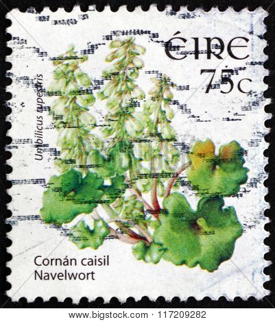 Postage Stamp Ireland 2006 Navelwort, Flowering Plant