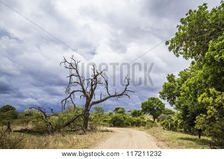 landscape, cloudy sky and trail in savannah In Kruger National Park