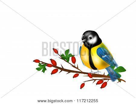 Chickadee On Rose Hip Twig