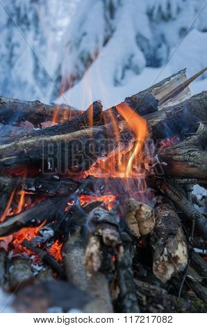 Fire Burns In The Snow In The Woods, On A Background Of Snow-covered Firs,