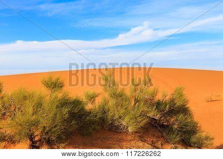 green shrub in the Sahara