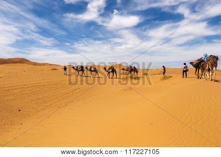 camels going through the desert