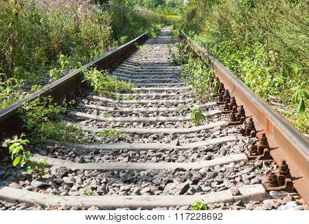 Overgrown single-track railway