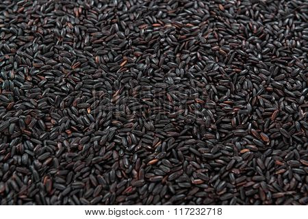 Black Rice (for Use As Background Image Or As Texture)
