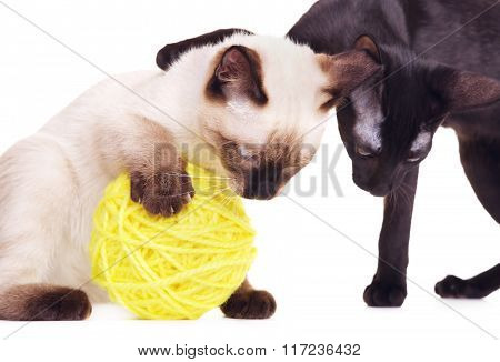 Two Cats Playing With Woolen Ball