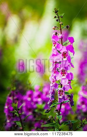 Colorful Flowers Field With Blurry Background