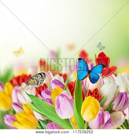 Beautiful tulips bouquet with butterflies. Spring theme.