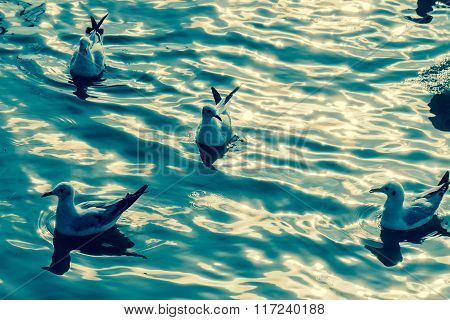 Sunlight On Sea Wave With The Seagull From Thailand