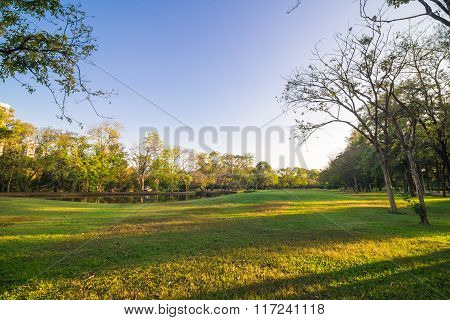 Green Trees In Beautiful Park Over Blue Sky In Evening