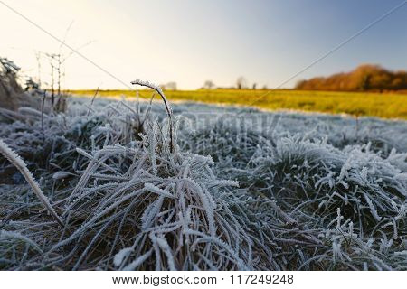 Winter Frosty Grass Landscape With Blue Sky