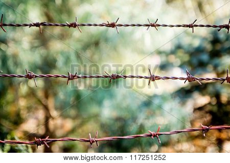Barb wire close up
