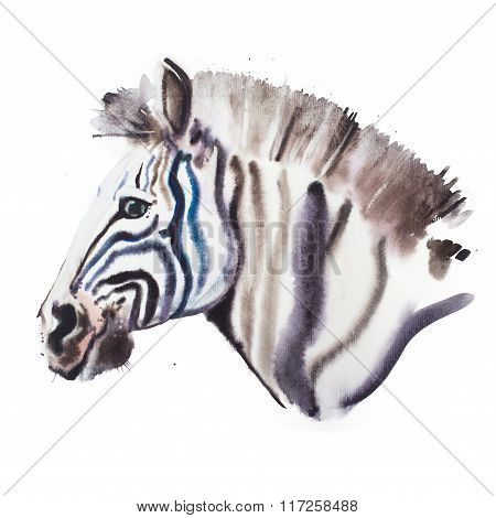 Hand drawn watercolor illustration portrait of zebra