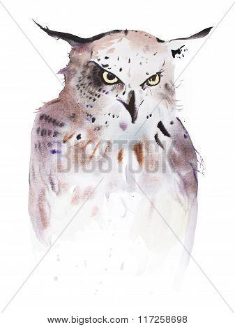 Hand drawn watercolor illustration portrait of owl