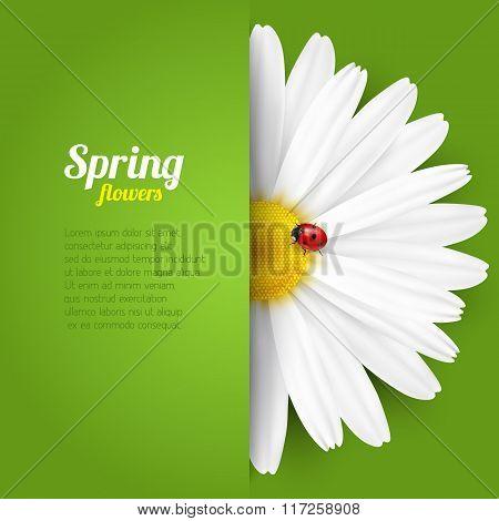 Spring flower in paper pocket