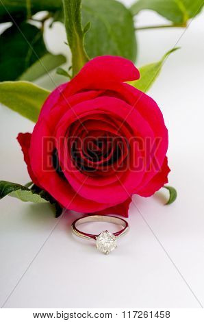 Single Red Rose with Diamond Ring