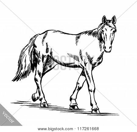 engrave ink draw horse illustration