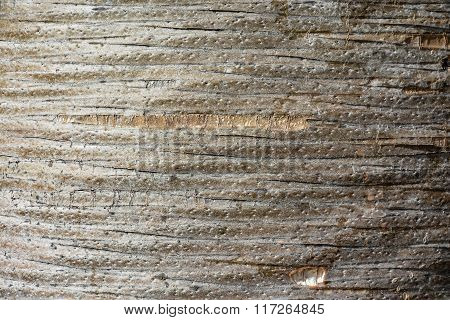 Unusual wooden texture, pattern, background (trunk of dracaena draco - dragon tree)
