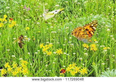 Green Lawn With Spring Flowers And Insects