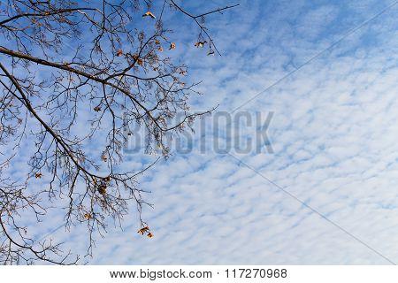 Very beautiful autumn sky