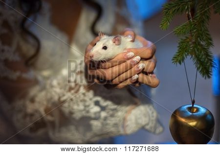 White lab rat in his hand-2