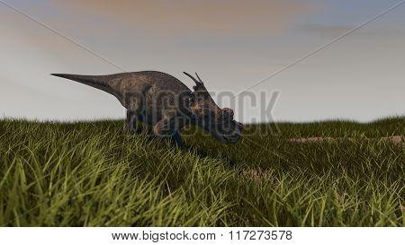 achelousaurus on grassy terrain