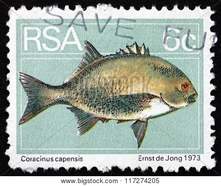 Postage Stamp South Africa 1974 Galjoen, Marine Fish