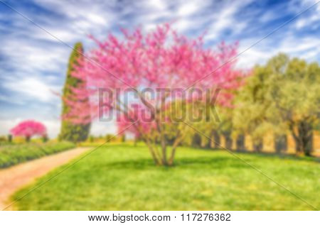 Defocused Background With Beautiful Garden, Cypresses Cherry And Olive Trees