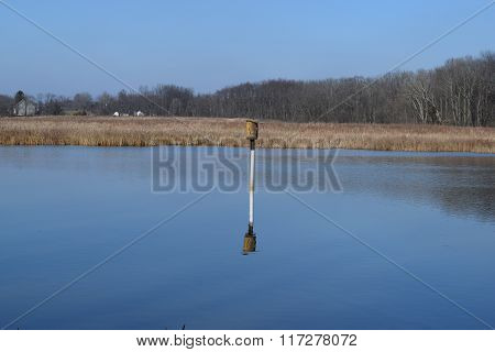 a bird house in a calm pond