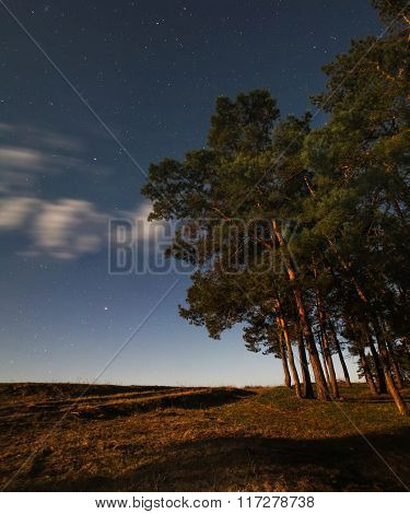 Night Sky In Pine Forest