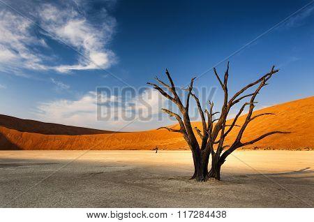 Sossusvlei in the Namib Desert Namibia