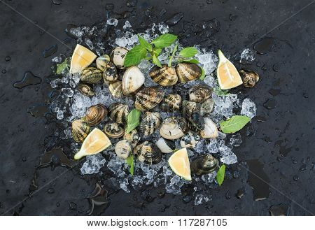 Fresh uncooked clams with lemon, herbs and spices on chipped ice over dark slate stone backdrop