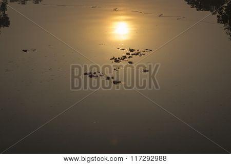 Sunrise In Water