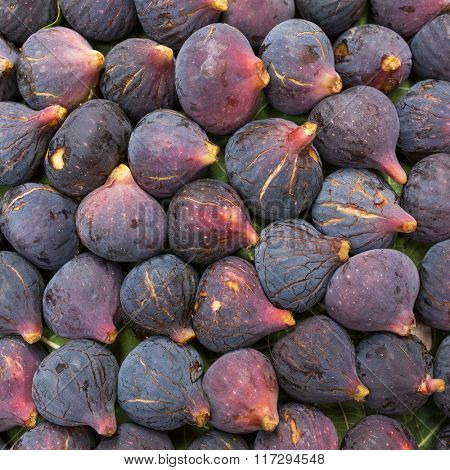 Fresh ripe purple (Black Mission) figs closeup background