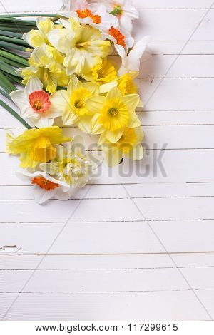 Fresh  Spring Yellow Narcissus Flowers  On White Wooden Planks.