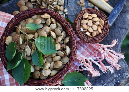 Dried apricot seeds, top view