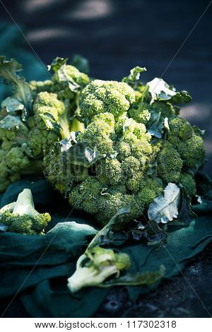 broccoli on a dark table