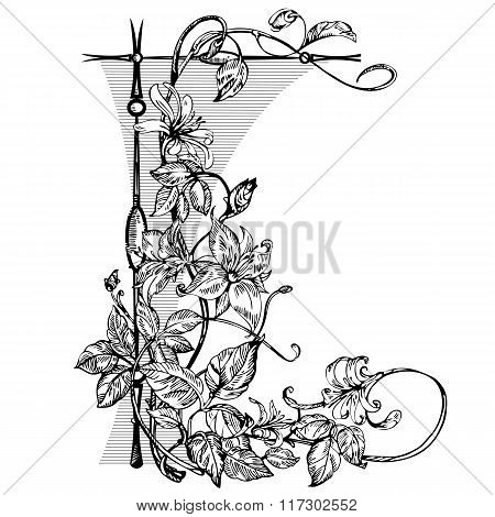 Vintage elegant flowers. Black and white vector illustration. Honeysuckle flower. Botany.