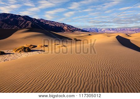 Mesquite Flat Sand Dunes in Death Valley. Small bushes grow in the valleys between the barkhans.  Orange light in the morning over sand dunes