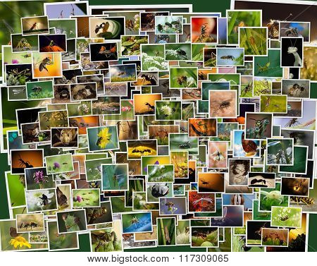 A collage of photos of insects