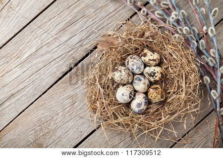 Quails eggs in nest on rustic wooden background with copy space