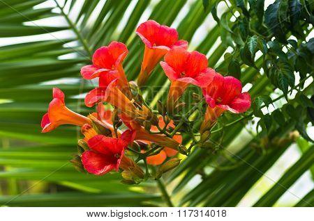 Beautiful orange mediterranean flowers at morning