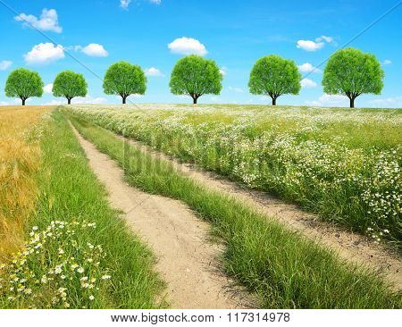 Dirt road in sunny day. Summer landscape.