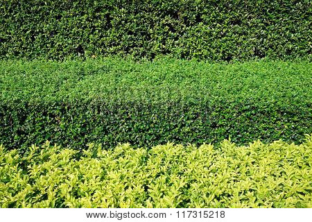Green Bushes In Three Horizontal Layers Background