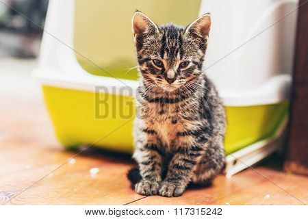 Kitten Sitting In Front Of A Covered Litter Box