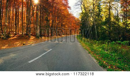 Orange And Green Forest_pano