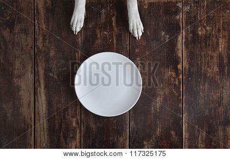 Dog's Paws On Old Wooden Table With Plate